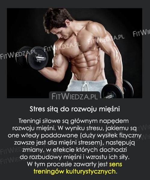 rozwójmięśni