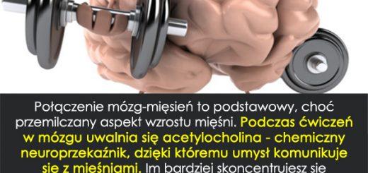 mozgmiesien1